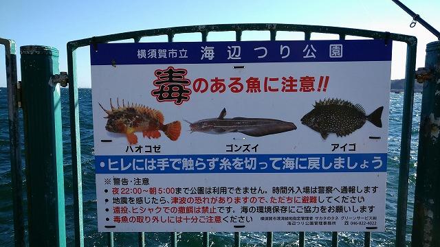 毒魚に注意!