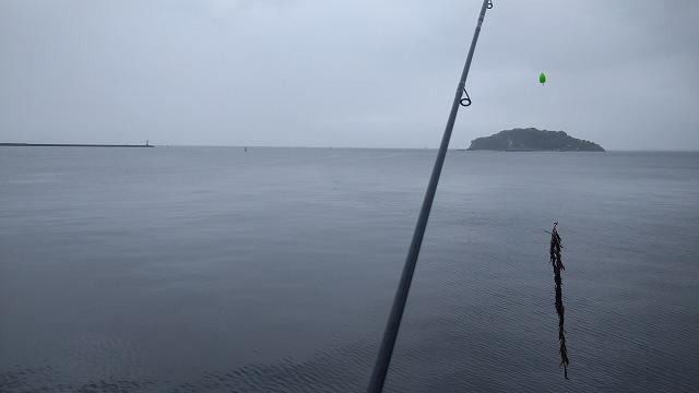 海藻釣れましたw